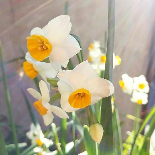 【くらしの歳時記】<br>2月4日は「立春」