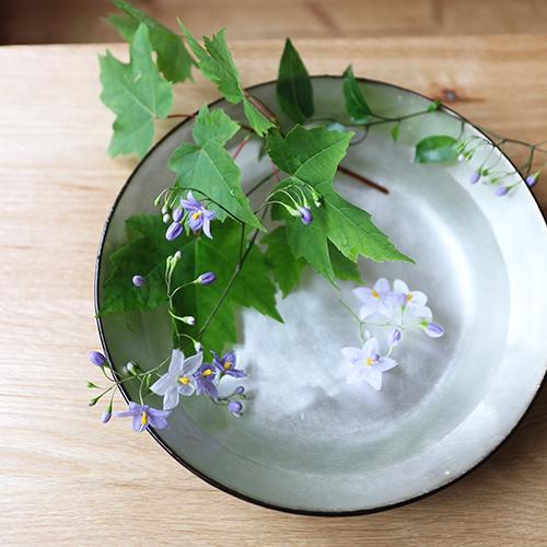 【まいにちと花】<br> 葉月8月 「涼やかなおもてなし」