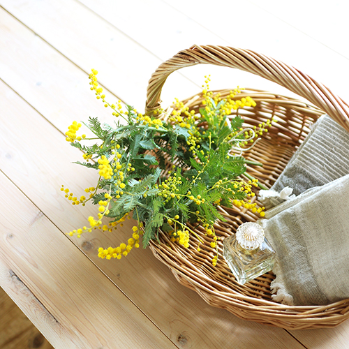 【まいにちと花】<br> 弥生3月 「ミモザの日」